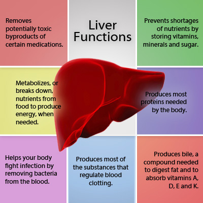 ayur liver clinic, india., Human body